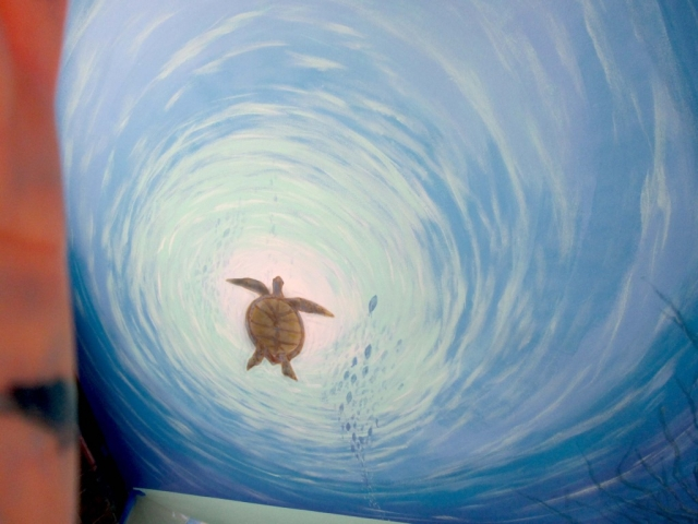 Swimming Turtle on Ceiling by Rik Erickson in San Diego, California mural