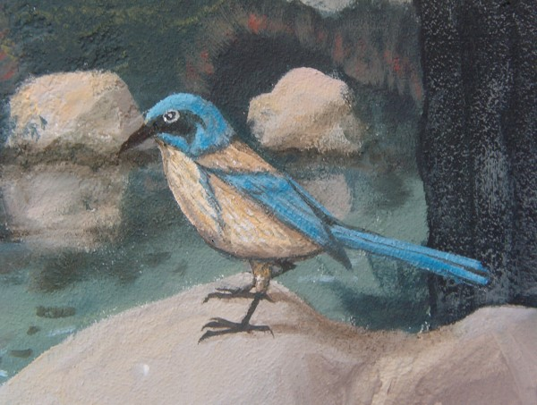 Scrub Jay Oriental Mural in progress